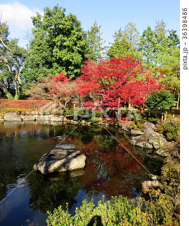 福井県 西山公園 紅葉 36398486