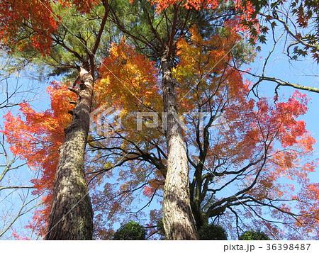 福井県 西山公園 紅葉 36398487