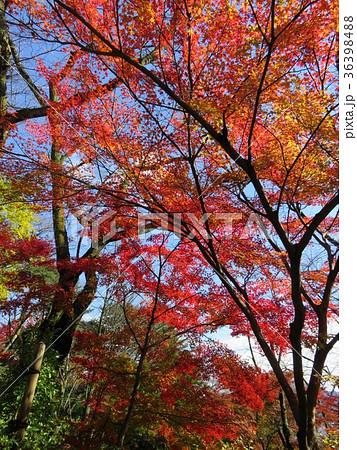 福井県 西山公園 紅葉 36398488