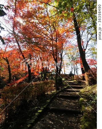 福井県 西山公園 紅葉 36398490