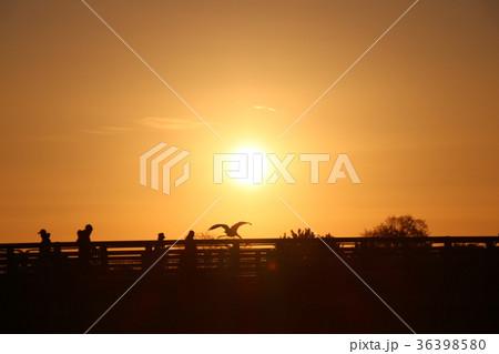 嵐山渡月橋の朝日 36398580