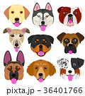 ベクター 動物 犬のイラスト 36401766