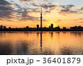 東京スカイツリー 荒川 夕焼けの写真 36401879