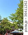 寺社風景(東京、浅草寺、新緑) 36411262