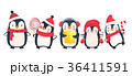 ぺんぎん ペンギン クリスマスのイラスト 36411591