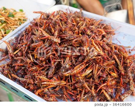 タイの露天 食用昆虫 36416600
