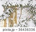 松の枝に積もった雪とその向こうの景色 36436336
