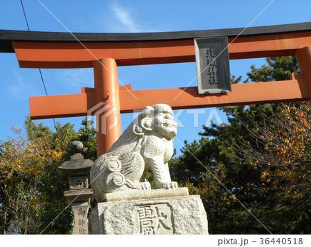 検見川浅間神社の赤い鳥居と石作りの狛犬 36440518