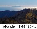 風景 伊豆大島 相模湾の写真 36441041
