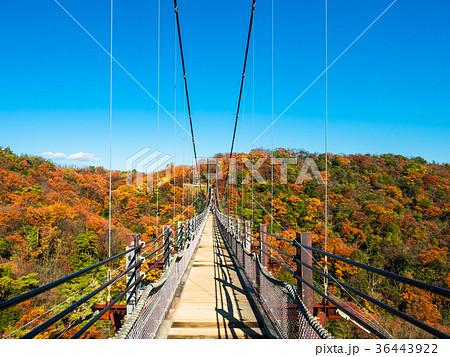 ほしだ園地の吊り橋と紅葉 36443922