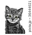 子猫 36444021