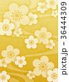 梅 春 花のイラスト 36444309