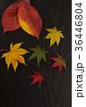 葉っぱ 落ち葉 もみじの写真 36446804