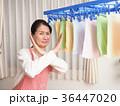 人物 女性 洗濯物の写真 36447020