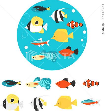 熱帯魚 36448923