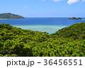 阿嘉島 自然 風景の写真 36456551