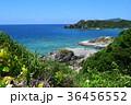阿嘉島 自然 海の写真 36456552