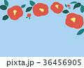 椿 花 背景のイラスト 36456905