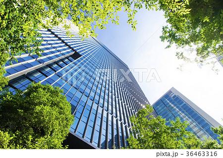 オフィス街の高層ビルと緑 36463316