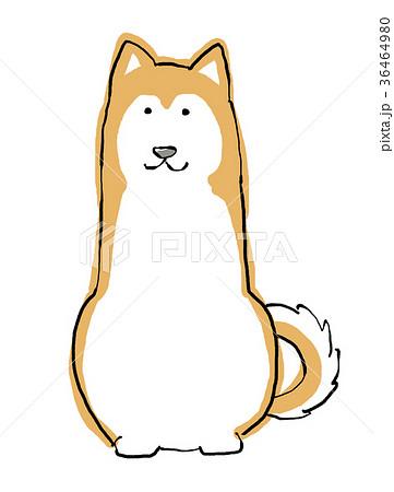 日本犬 首輪なし 手描きイラストのイラスト素材 36464980 Pixta