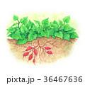 農業 耕作 農のイラスト 36467636
