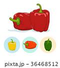 ピーマン 美味しい トウガラシのイラスト 36468512