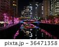 目黒川 イルミネーション 夜の写真 36471358
