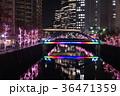 目黒川 イルミネーション 夜の写真 36471359