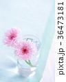 やぐるまぎく 矢車菊 花の写真 36473181