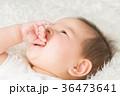 指しゃぶりする赤ちゃん 36473641