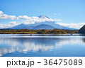 秋 精進湖 富士山の写真 36475089