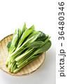 小松菜 野菜 葉物野菜の写真 36480346