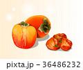 イラスト 挿絵 ほし柿のイラスト 36486232