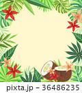 森林 林 森のイラスト 36486235
