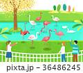 イラスト イラストレーション 挿絵のイラスト 36486245