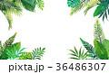 森林 林 森のイラスト 36486307