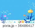 undersea world 004 36486417