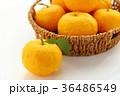 柚子 36486549