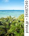 沖縄県 海 ビーチの写真 36487240