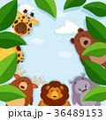 野生動物 野生生物 動物のイラスト 36489153
