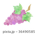 ぶどう 果物 果実のイラスト 36490585