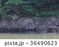 室生湖の濡れ地蔵 36490623