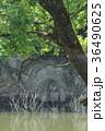 室生湖の濡れ地蔵 36490625
