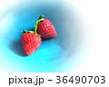 苺 36490703