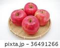 りんご リンゴ 果物の写真 36491266