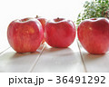 りんご リンゴ 果物の写真 36491292