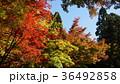 紅葉 風景 青空 36492858