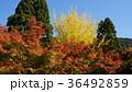 紅葉 風景 青空 36492859