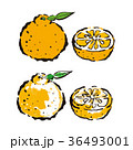 デコポン フルーツ 果物のイラスト 36493001