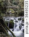 白糸の滝 渓谷 36495235
